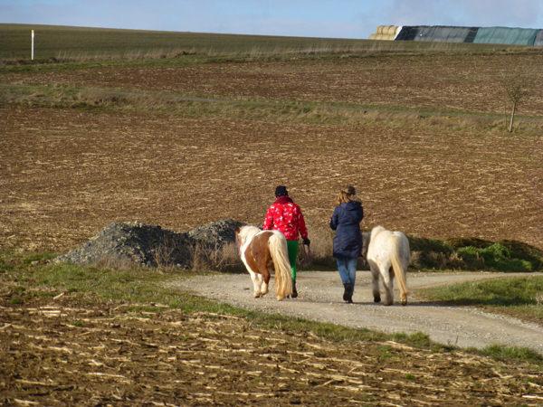 Durch die Natur mit Ponys