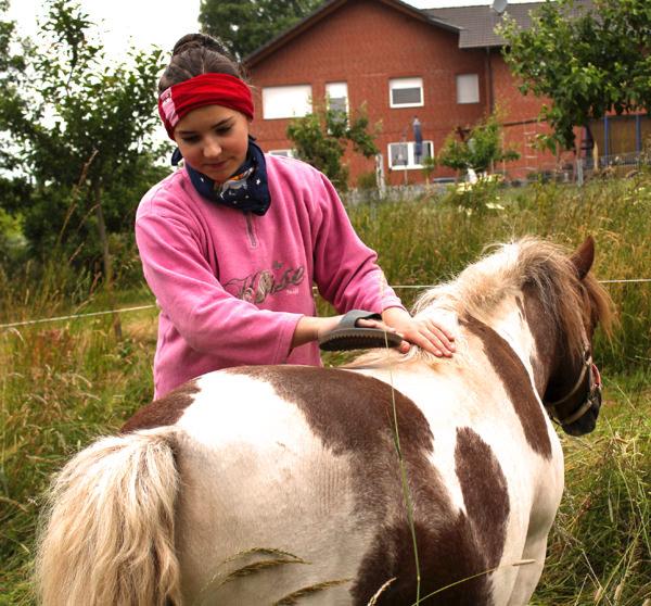 Ponys streicheln und Pflegen – huf-spur